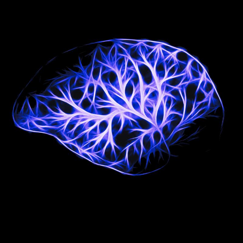 mind neuroscience